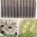 11 Volumes, The Orchid Albums, 1882-97. SOLD FOR $9,360
